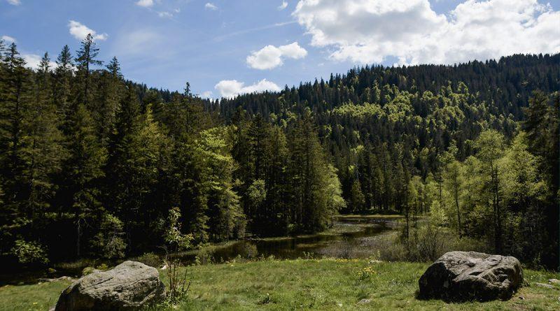 Idées de randonnées en Forêt Noire du Sud