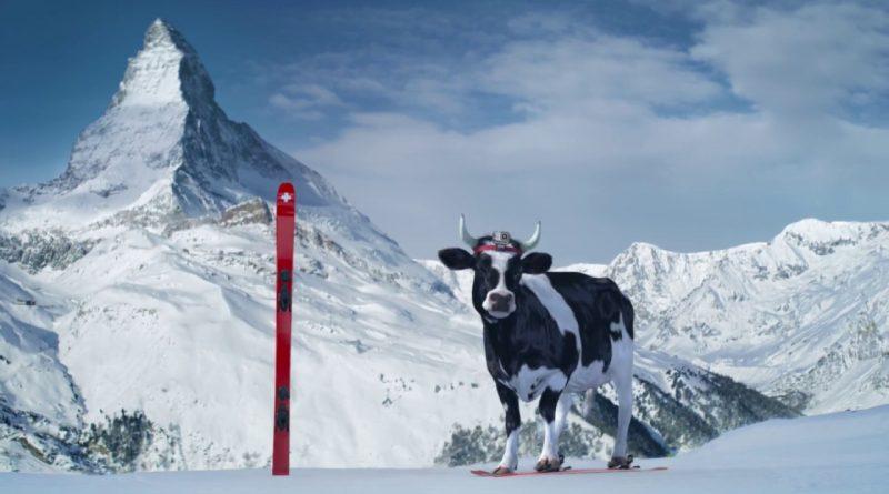Pubs suisses culte: la vache de Swiss Milk (lait suisse)