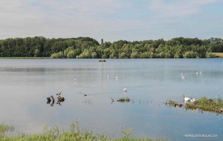 Lac artificiel de Michelbach - escapades nature autour de Mulhouse