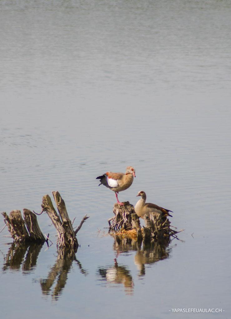 Ouettes d'egypte en Alsace - lac de Michelbach