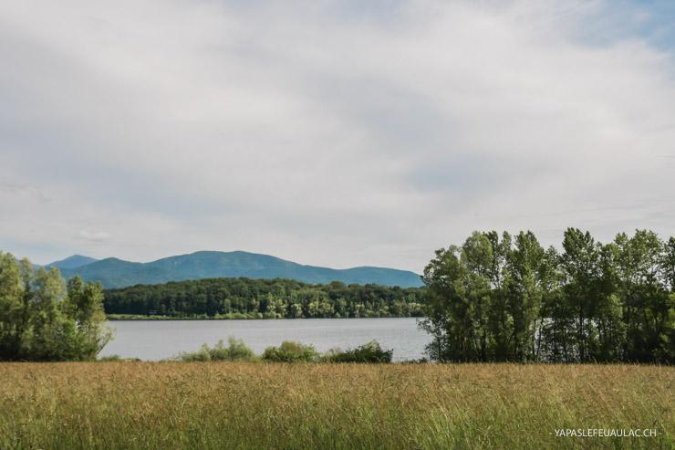 Michelbach - une réserve naturelle d'oiseaux