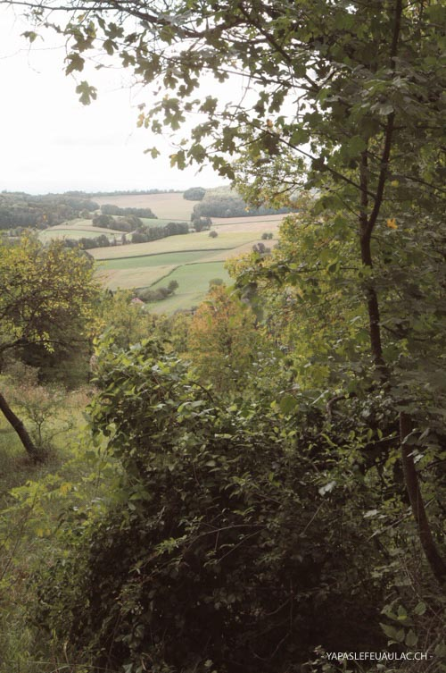 Balade autour de Mulhouse dans la forêt dans le Sundgau