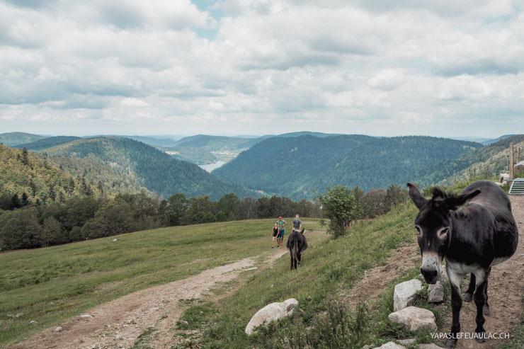 Rando entre Alsace & Lorraine près du col de la Schlucht