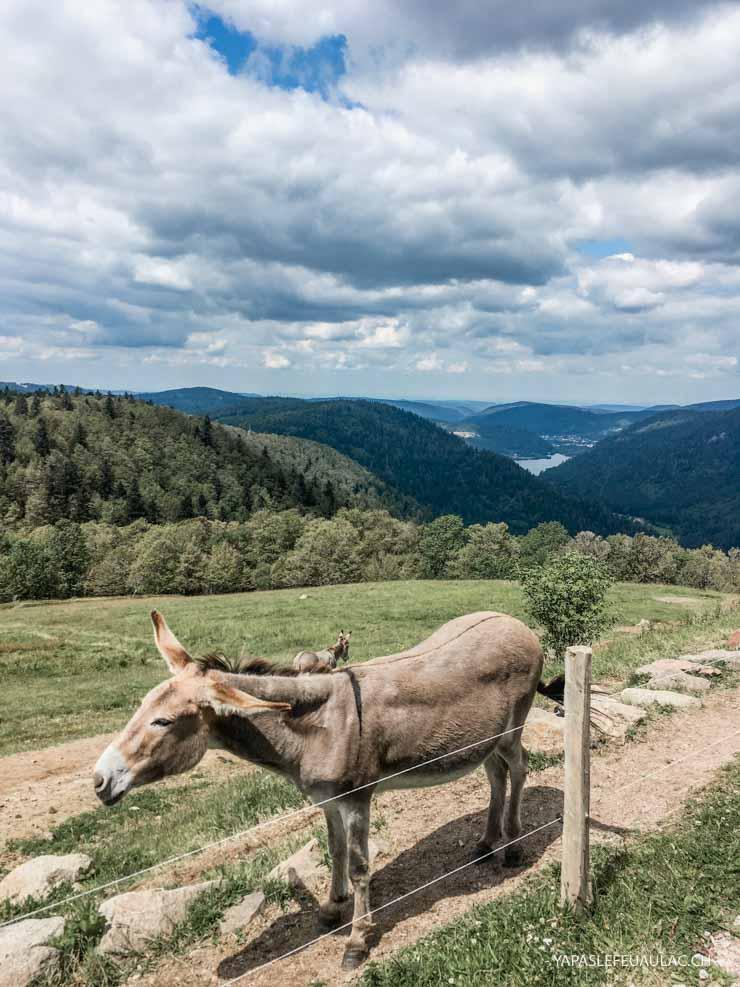 Le guide lorrain François Fuchs nous emmène en rando au col de Falimont (massif des Vosges)