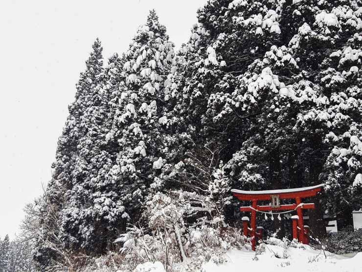 Expatriée au Japon avec ses enfants, Rose nous raconte sur le blog!