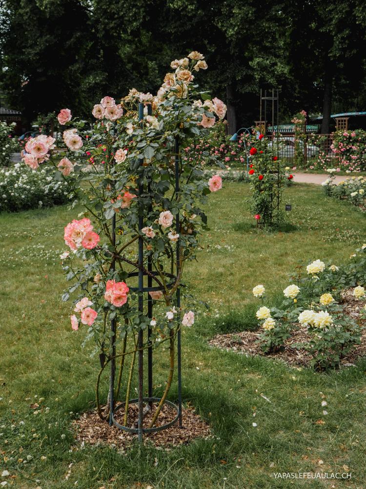 La roseraie du Parc de la Pépinière à Nancy