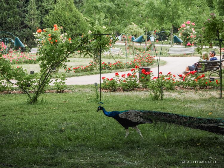 Au Parc de la Pépinière à Nancy