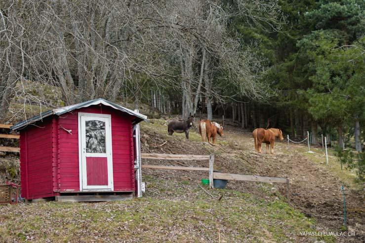 Des chevaux et une ânesse dans le pré - escapade dans les Vosges sur le blog