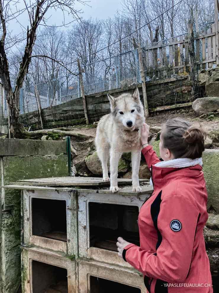Chemins du Nord - activités avec chiens de traîneau dans les Vosges