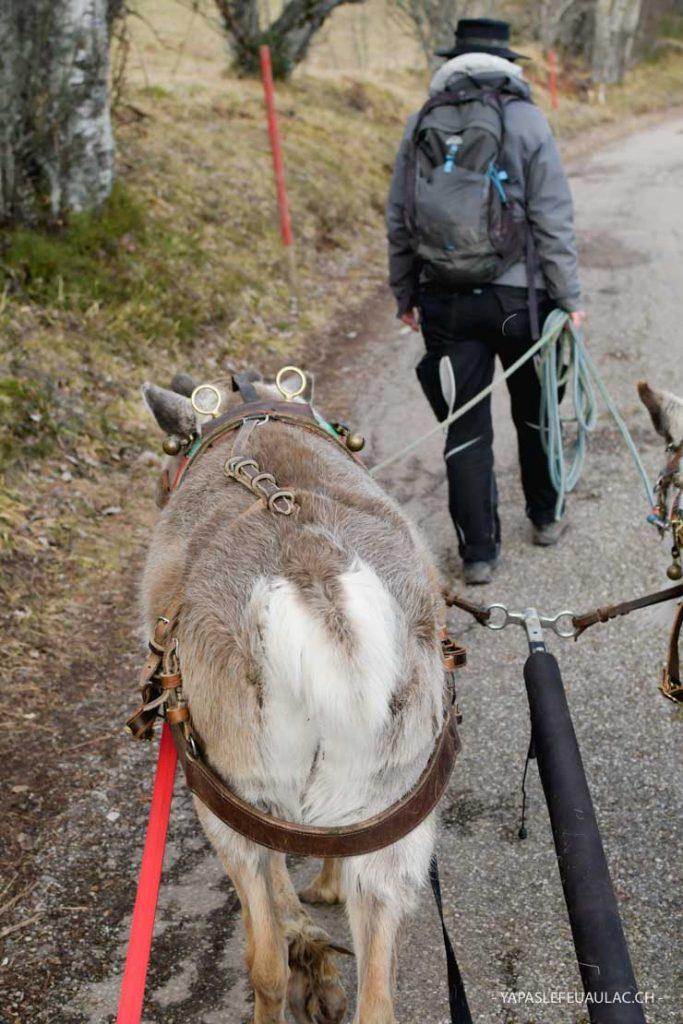 Des rennes dans les Vosges - bonne adresse