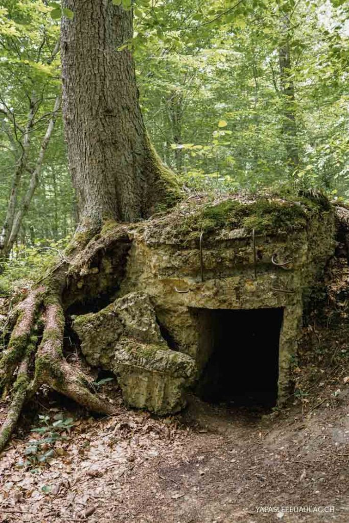 Un circuit facile dans le Sundgau en forêt sur les traces de WW1